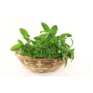 Dried Natural Stevia Leaves